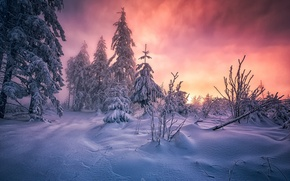 Картинка зима, лес, снег, утро, юго-запад Германии, горный массив Шварцвальд, земля Баден-Вюртемберг