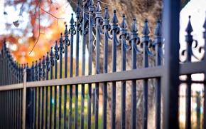 Картинка осень, листья, дерево, забор, прутья, боке, железные