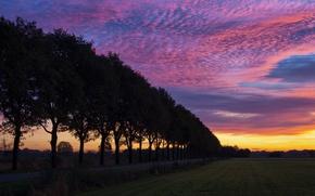 Картинка поле, деревья, закат, вечер