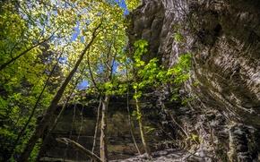 Картинка лес, деревья, скала, Новая Зеландия, New Zealand, Arrowtown