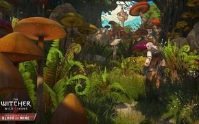 Картинка DLC, The Witcher 3: Wild Hunt, дополнение, Кровь и Вино, Blood and Wine