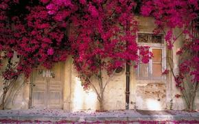 Картинка Цветы, Стена, Окно