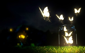Картинка трава, Ночь, огоньки, банка, мотыльки
