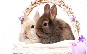 Картинка праздник, корзина, Пасха, кролики, пасхальные