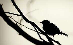 Обои силуэт, Черный, птица