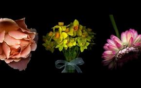 Картинка цветы, фон, черный, роза, нарциссы, гербера