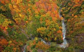 Обои ущелье, сверху, река, лес