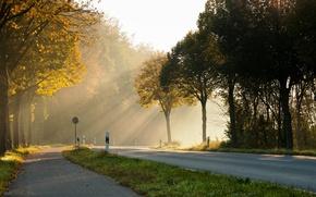 Картинка дорога, солнце, свет, деревья, утро