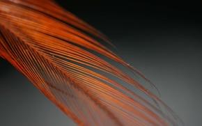 Картинка перо, черный, оранжевое