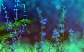 Картинка цвета, макро, цветы, природа, обработка, растения, зеленые, синие