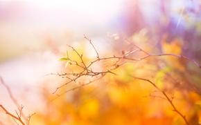 Картинка осень, ветвь, Abstract, Autumn, листики, Colors