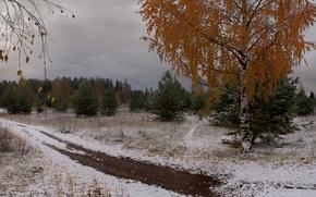 Картинка листья, снег, деревья, Зима, береза, Ёлки
