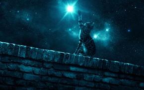Обои кошка, ночь, стена, звезда, лапа, звездное небо