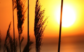 Картинка трава, солнце, Закат
