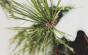 Картинка снег, веточка, елка