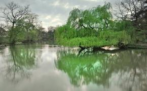 Картинка деревья, озеро, парк, весна, Дрезден