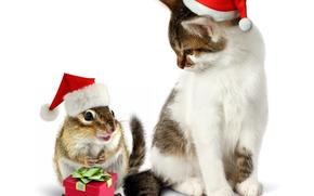 Картинка кошка, кот, подарок, шапка, Новый год, зверек, бурундук, Christmas, cat, колпак, New Year, gift