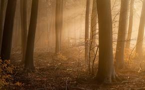Картинка лес, туман, утро, Approach
