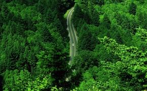 Обои дорога, зелень, машина