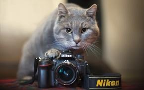Картинка кошка, камера, Nikon