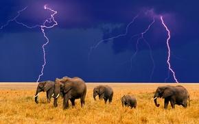 Обои африка, молния, слоны