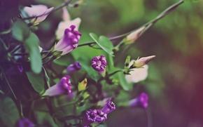 Картинка осень, цветы, зелёные оттенки