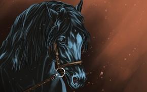 Картинка Арт, лошадь, черная, взгляд, фон