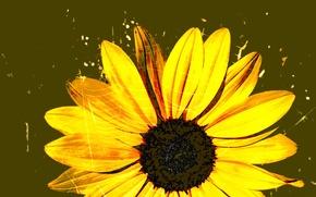 Картинка цветок, рисунок, паутина, лепестки, гербера