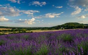 Картинка поле, небо, облака, дома, лаванда, фермы