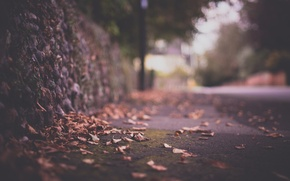 Обои макро, листва, ограда, дорога, блики, осень, город