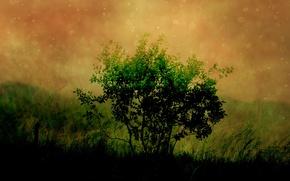 Картинка зелень, темнота, дерево, рисунок