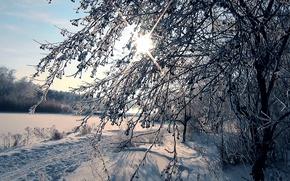 Картинка иней, лес, солнце, снег, лыжня, Зима, Сибирь