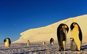 Обои луна, снег, пингвины, зима, мороз, льды, антарктика