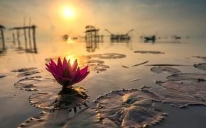 Картинка солнце, отражение, Тайланд, Лотос