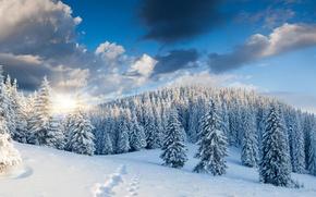 Картинка зима, лес, снег, деревья, пейзаж, следы, природа, восход