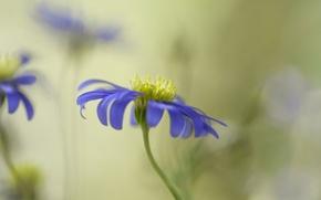 Обои цветок, сиреневый, фон, размытость