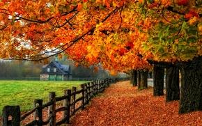 Картинка дорога, осень, листья, деревья, природа, дом, colors, colorful, road, nature, glow, autumn, leaves, tree, branches, …