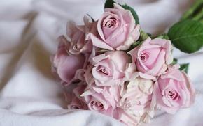 Картинка нежность, розы, букет, бутоны