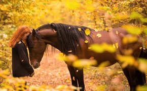 Картинка осень, девушка, конь