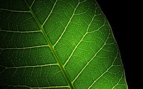Картинка макро, свет, зеленый, Лист, блик, прожилки