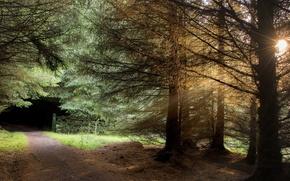 Картинка дорога, свет, деревья, пейзаж