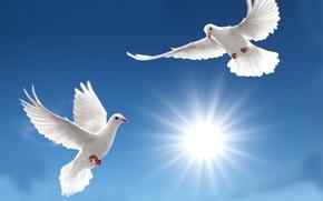 Картинка sky, sun, pigeons