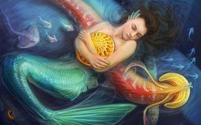 Картинка море, девушка, рыбы, русалка, ракушка, арт
