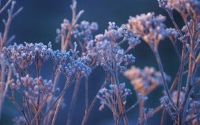 Картинка иней, трава, макро, природа