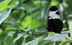 Картинка листья, бабочка, крылья, ветка, усики