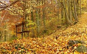 Картинка осень, лес, скамейка, листва