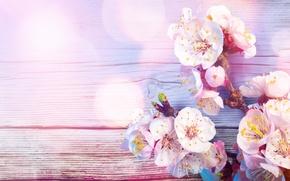 Картинка вишня, блики, ветка, весна, нежно, trees, цветущая, боке, gently, Flowering