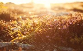 Картинка макро, свет, macro, природа, боке, grass, light, трава, nature, bokeh, 2560x1600