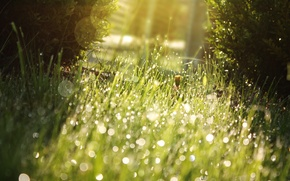 Картинка зелень, трава, солнце, капли, макро, свет, природа, блики, газон, сочно