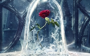 Обои Красавица и чудовище, постер, цветок, роза, фэнтези, узоры, снежные, Beauty and the Beast